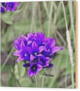 Clustered Bellflower Wood Print