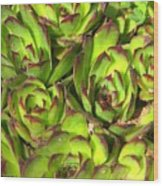 Clustered Succulents Wood Print