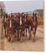 Clydesdale Amish Plow Team Wood Print