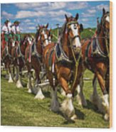 Budweiser Clydesdale Horses Wood Print