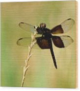 Coal Black Dragonfly Wood Print