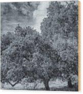 Coast Live Oak Monochrome Wood Print