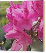 Coast Rhododendran- Washington State Flower Wood Print