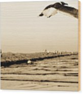 Coastal Bird In Flight Wood Print
