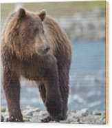 Coastal Brown Bear Wood Print