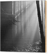 Coastal Forest 2 Wood Print
