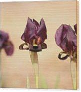 Coastal Iris  Wood Print