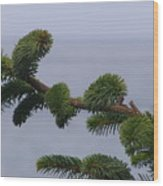 Coastal Living Wood Print