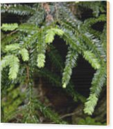Coastal Pine Wood Print