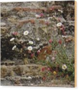 Coastal Wildflowers 1 Wood Print