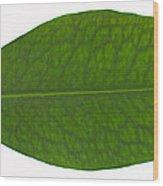 Coca Leaf, Erythroxylon Coca Wood Print