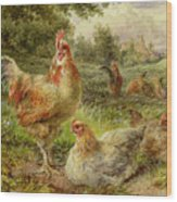 Cochin China Fowls Wood Print