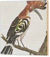 Cock Hoopoe Wood Print