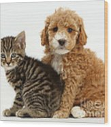 Cockapoo Puppy And Tabby Kitten Wood Print