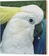 Cockatoo Bird Wood Print
