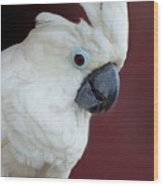 Cockatoo Portrait Wood Print