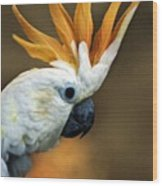 Cockatoo Show Off Wood Print