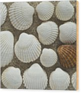 Cockles Collection Wood Print