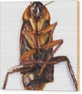 Cockroach Carcass Wood Print