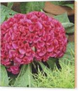 Cockscomb Flower Wood Print