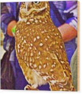 Coco The Burrowing Owl In Living Desert Zoo And Gardens In Palm Desert-california Wood Print