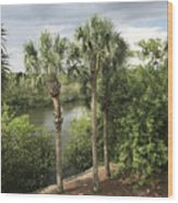 Cocohatchee River  Wood Print