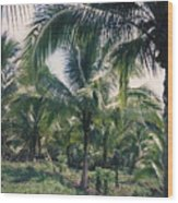 Coconut Farm Wood Print