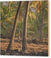 Coconut Palm Grove Wood Print