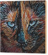 Coconut The Feral Cat Wood Print