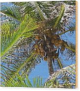 Coconut Tree Wood Print