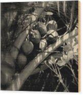 Coconuts Wood Print