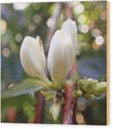 Coffee Blossom 2 Wood Print