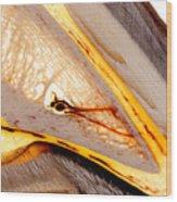 Coffin Bone Plastination With Vascularisation Anatomical Details Wood Print