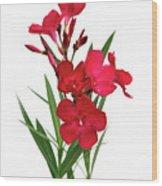 Cog  Nerium Oleander Emile Sahut Wood Print