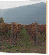Colchagua Valley Vinyard II Wood Print