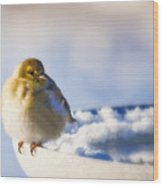 Cold American Goldfinch Wood Print