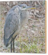 Cold Blue Heron Wood Print
