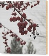 Cold Crabapples Wood Print