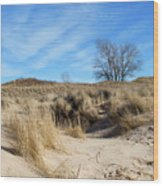 Cold Dune Day Wood Print