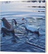 Cold Morning Swim 2 Wood Print