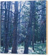 Cold Mountain Light Wood Print