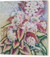 Coleus And Queen Anne Wood Print