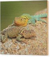 Collared Lizards Wood Print