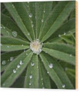 Collecting Rain Wood Print