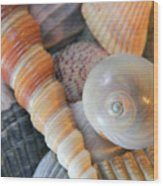 Collecting Shells Wood Print
