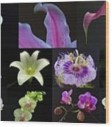Collection Of Flowers Over Black  Wood Print