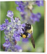 Collection Of Pollen Wood Print