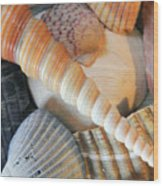 Collection Of Shells Wood Print