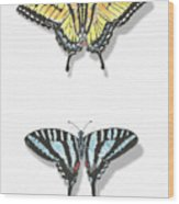 Collection Of Two Butterflies Wood Print