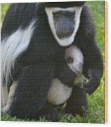 Colobus Monkey With Baby Wood Print